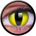 Crazy Cat Eye